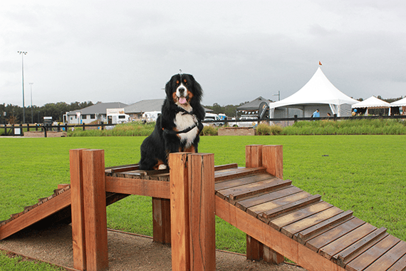 Dog Park tips: Getting the most out of Paw Park
