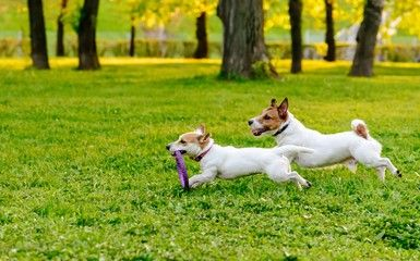 The benefits of well-designed dog parks for communities